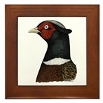 Ringneck Rooster Head Framed Tile