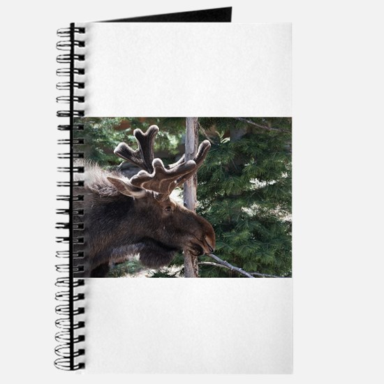 Srping Moose Journal
