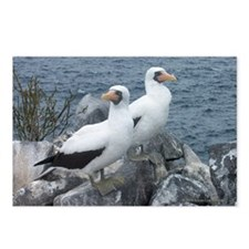 Masked Boobies Postcards (Package of 8)