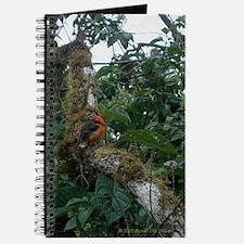 Vermillion Flycatcher Journal