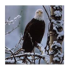 Bald Eagle Tile Coaster