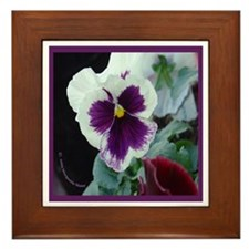White and Purple Pansy Framed Tile
