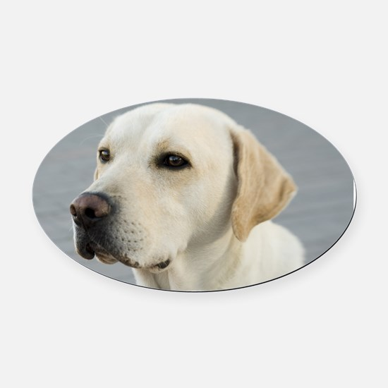 Labrador Oval Car Magnet