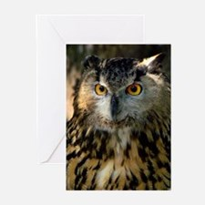 A Bengalese Eagle Owl Greeting Cards (Pk of 10)