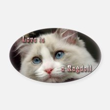 Ragdoll Cats Oval Car Magnet
