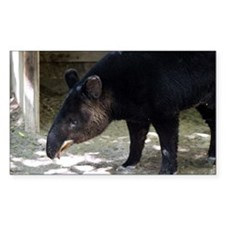 Mountain Tapir with its tongue out Decal