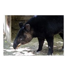 Mountain Tapir with its tongue out Postcards (Pack