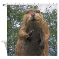 Cute Beaver Shower Curtain
