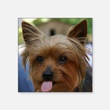 Cute Yorkie Square Sticker
