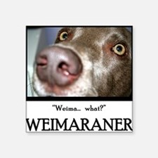 Weimaraner Square Sticker
