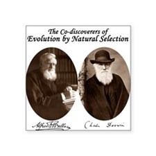 Wallace & Charles Darwin Square Sticker