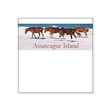 Assateague Ponies Square Sticker