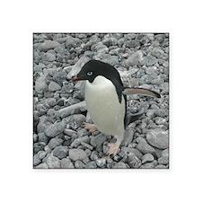 Adelie Penguin Walking 3 Square Sticker