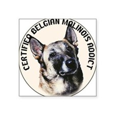 BELGIAN MALINOIS ADDICT Square Sticker