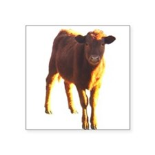 red angus Square Sticker