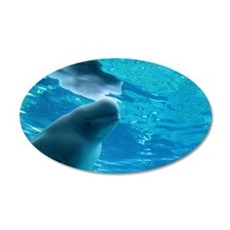 Close up of a Beluga Whale with its refection 22x1