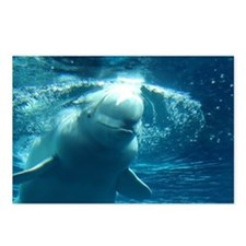 Close up of a Beluga Whale 5 Postcards (Package of