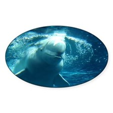 Close up of a Beluga Whale 5 Decal