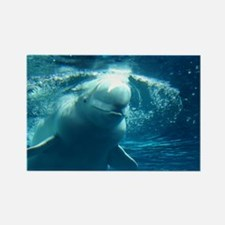 Close up of a Beluga Whale 5 Rectangle Magnet