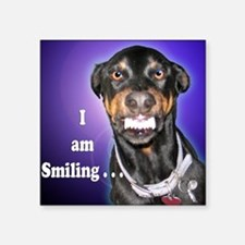 Doberman Pinscher Smiles Square Sticker