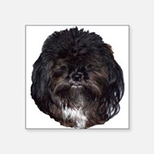 Black Shih Tzu Square Sticker