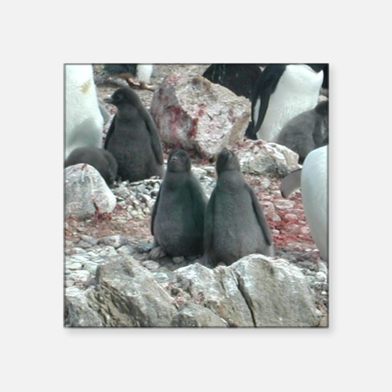 Adelie Penguin Chicks Square Sticker
