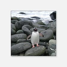 Gentoo Penguin on the Rocks Square Sticker