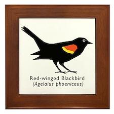 red-winged blackbird Framed Tile