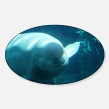 Close up of a Beluga Whale 3 Decal