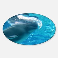 Close up of a Beluga Whale 2 Sticker (Oval)