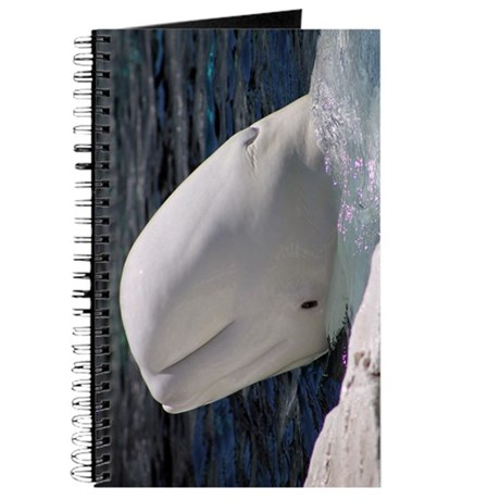 Close up of a Beluga Whale.jpg Journal