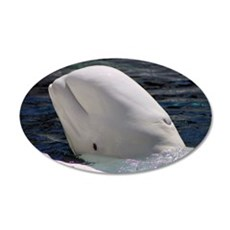 Close up of a Beluga Whale 22x14 Oval Wall Peel