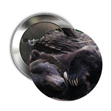 """A Sleeping Grizzly Bear 2.25"""" Button"""