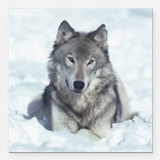 """Wolf Square Car Magnet 3"""" x 3"""""""