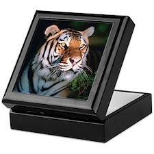 Tiger At Night Keepsake Box