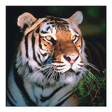 "Tiger At Night Square Car Magnet 3"" x 3"""