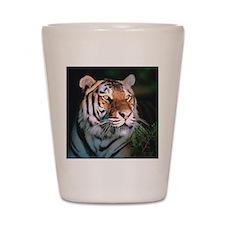 Tiger At Night Shot Glass
