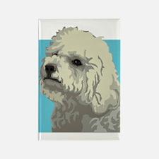 Bolognese dog Rectangle Magnet (100 pack)