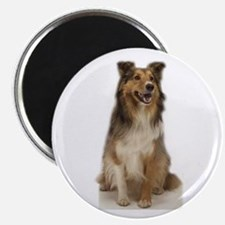 """collie 2.25"""" Magnet (10 pack)"""