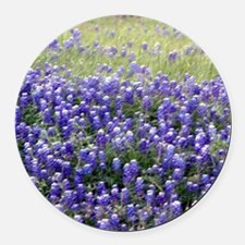 Texas Field of Blue Magnet