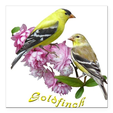 Goldfinch Square Car Magnet