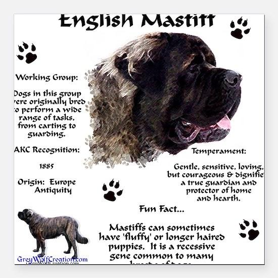 English Mastiffs Car Magnets Cafepress