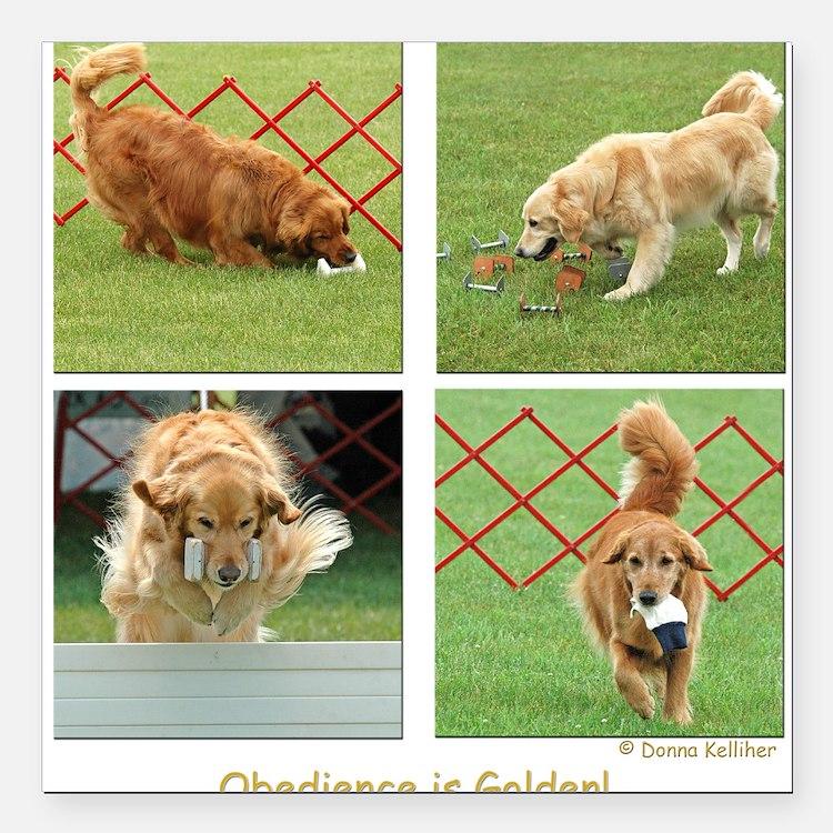 Golden Retriever Obedience Square Car Magnet