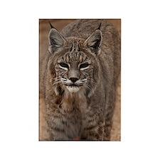 Lynx 5214 Rectangle Magnet