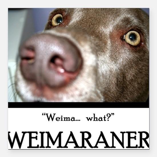 Weimaraner Square Car Magnet