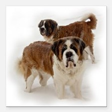 Saint Bernards in the snow Square Car Magnet