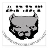 Pit bull Square Car Magnets