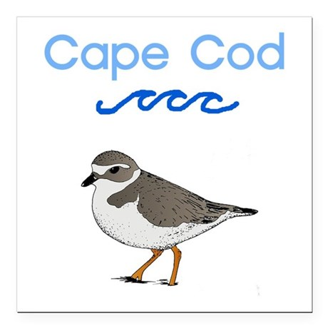 Cape Cod Piping Plover Square Car Magnet