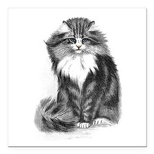 Beautiful Blue Eyed Cat Square Car Magnet 3""
