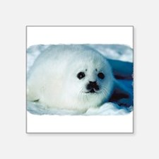 "c485h0028babyseal.png Square Sticker 3"" x 3"""